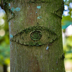 Het oog in het bos...
