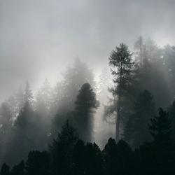 Ochtenmist in de bergen