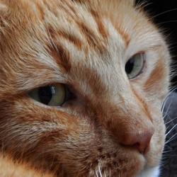 Kat van moeders