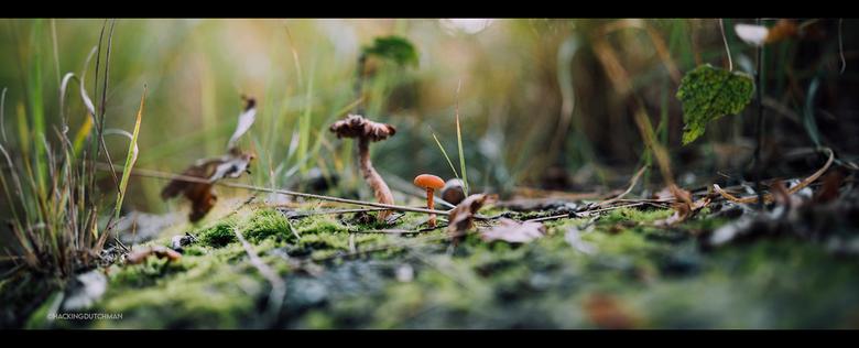 Paddenstoel - Kleine paddenstoel met een grotere paddenstoel op de achtergrond.<br /> <br /> <br /> <br /> <br /> ©MotionMan 2020