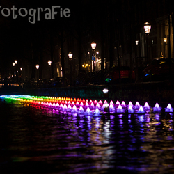 Gekleurde lelies