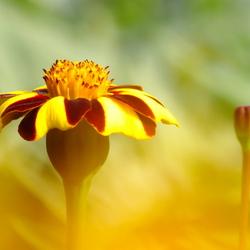 In de bloemenhemel.