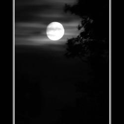 Verbeterde Moonlight