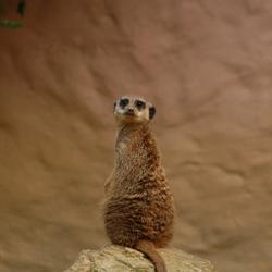 In de dierentuin!