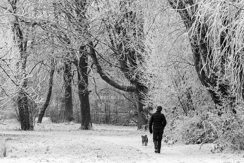Winter in het park -