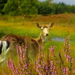 Bambi's vriendinnetje Feline