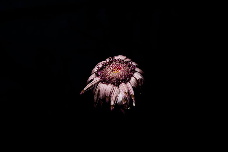 Withered flower -