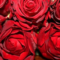 Romantisch rood