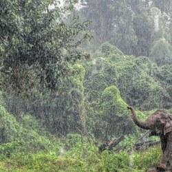 Elephant in the Rain