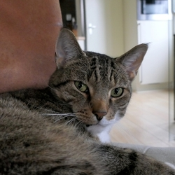 Philo, de huiskat van vrienden