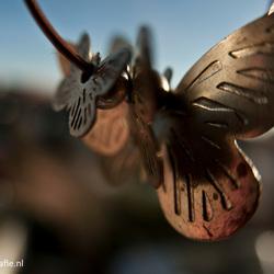 Metaale Vlinder