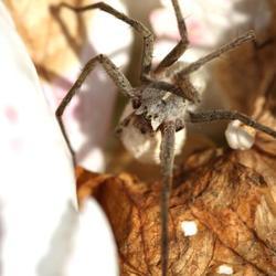 Een flinke spin