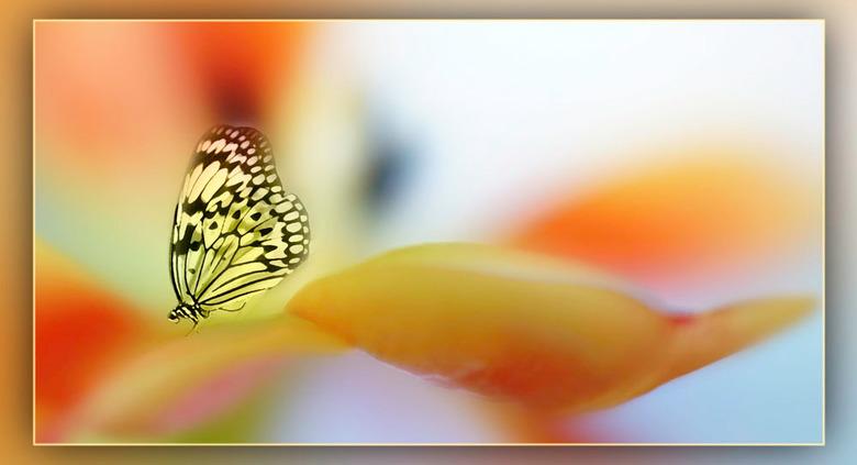 vlinder op bloem...................... - eigenlijk mag het niet meer: foto's van bloemen, vlinders en weet ik veel, getuige verschillende reactie