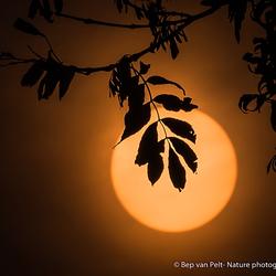 De rood-gele zon van 17 oktober