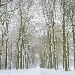 Winters Ter Apel