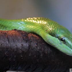 slangen in blijdorp