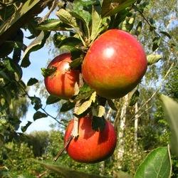waar is de tijd ,lekker weertje lekkere appels