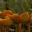paddenstoelen-4