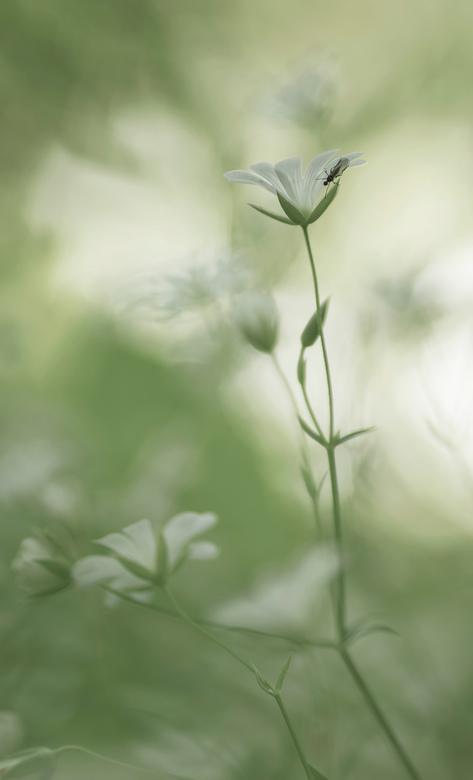 Romantic - Romantische opname van dit lieve, witte bloemetje. Volgens Cocky is het Grote Muur.