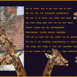 Giraffenkoor