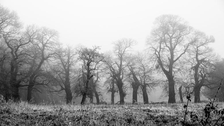 Eikenbomen - Bergen op Zoom