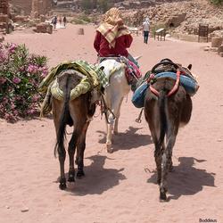 bedoein met ezels 1505192318Rm1w