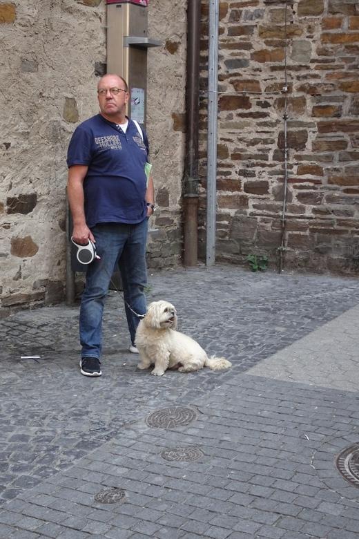 Baas en hond - Verschillende interesse
