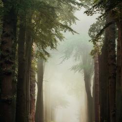 Dreamy Lane