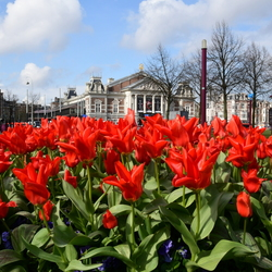 Tulpen @Amsterdam