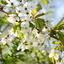 licht, lucht, lente