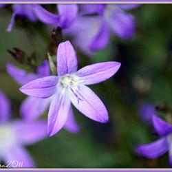 Bloemen in Oktober...