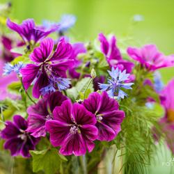 bloemetjes in een vaas