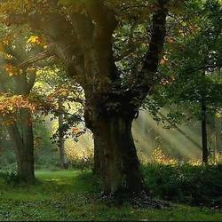Herfst zoals herfst kan zijn....