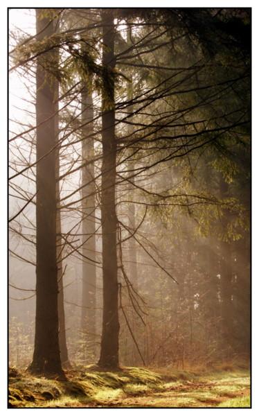 En toen was er nog meer licht... - Gisteren heb ik een beginnersworkshop natuur- en landschapsfotografie gevolgd van fotograaf Bas Meelker. Super leuk