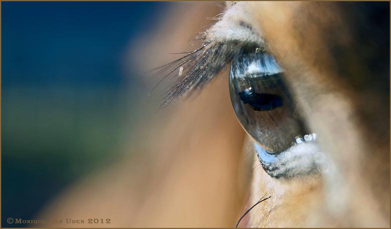 The world in my eyes - Een jong veulen met grote onschuldige ogen de wereld bekijkend......