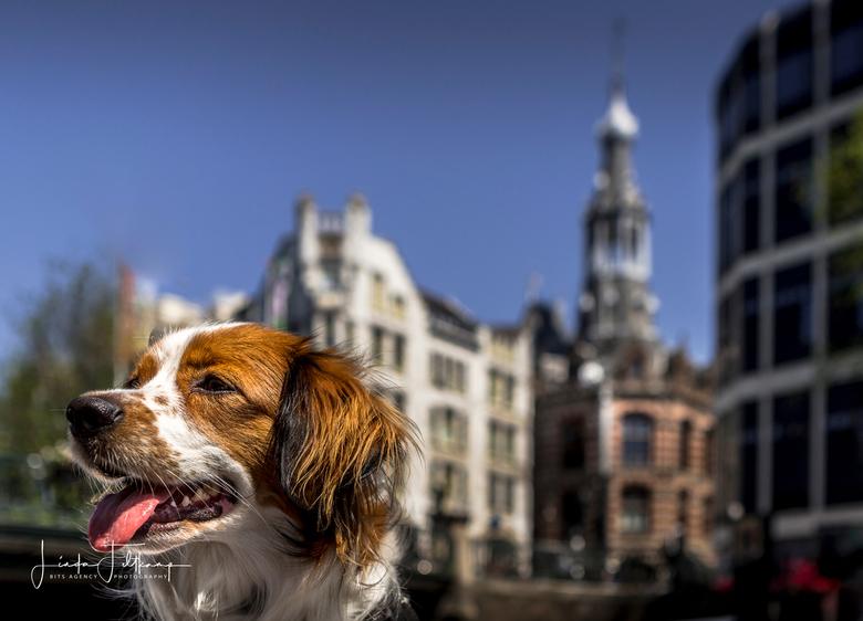 Tommy in Amsterdam - Met hond Tommy varend door Amsterdam.