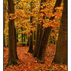 Season of colors