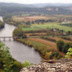 Muurhagedis met de Dordogne