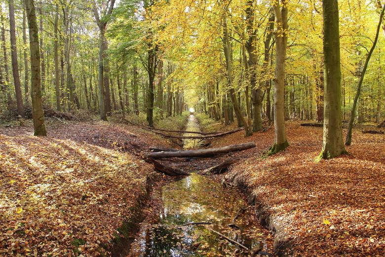 Herfst in het Dijkgatbos - Herfst in het Dijkgatbos