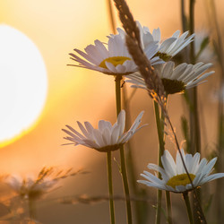 good morning wonderfull world