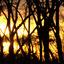 zonsondergang bij bosrand