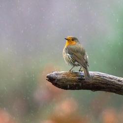 In de regen.