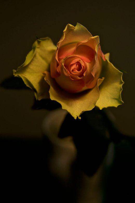 een roosje