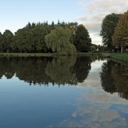 spiegeling in de vijver van het Gorechtpark