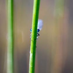 libelle verstopt