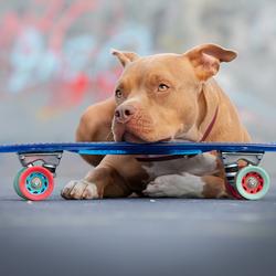 urban dog...