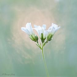 Fotograferen is schilderen met licht