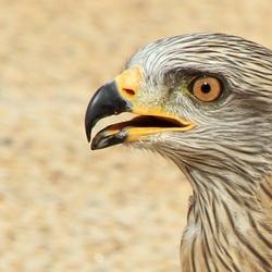 Roofvogelshow Lanzarote