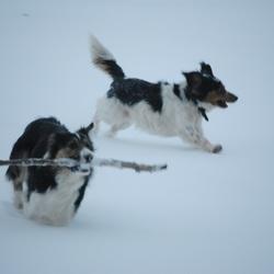 Als 2 honden...