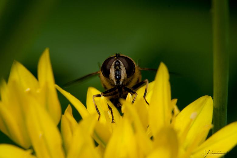 Eye to eye - Vanmiddag even in de tuin gelegen, vol bewondering wat er allemaal op de bloemetjes afkomt. Om dit alles vast te leggen en bij gebrek aan